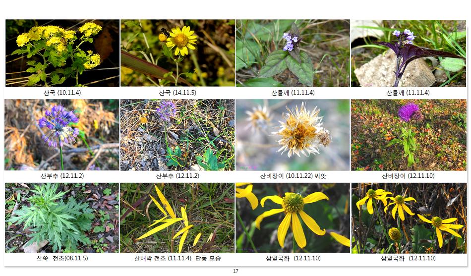 가을에 피는 야생화(14-11월- 5)