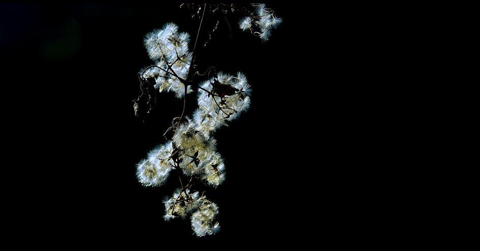 玛丽汉密尔顿《美好生活》 - 空山鸟语 - 月滿江南