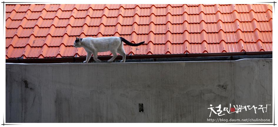 담장위의 고양이