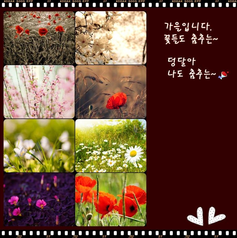 꽃-사진편집 연습 중